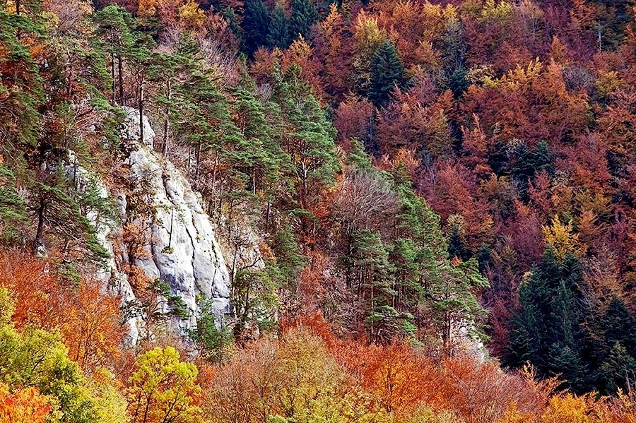 Herbstwald 2009